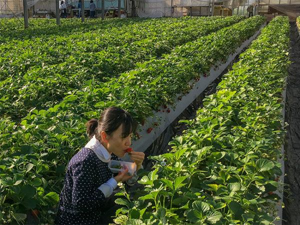 aardbeien Japan